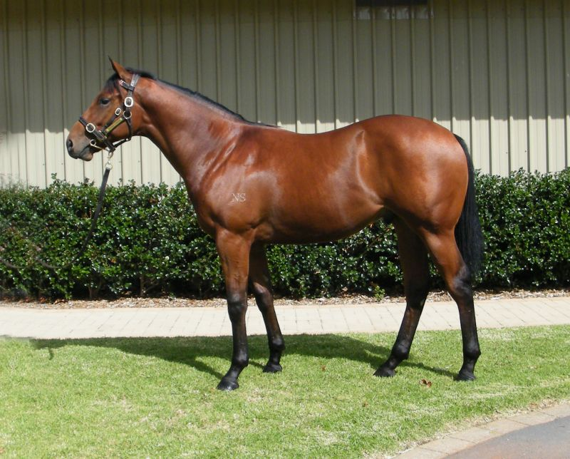 Righteous Mate at 2015 Australian Easter Yearling Sale