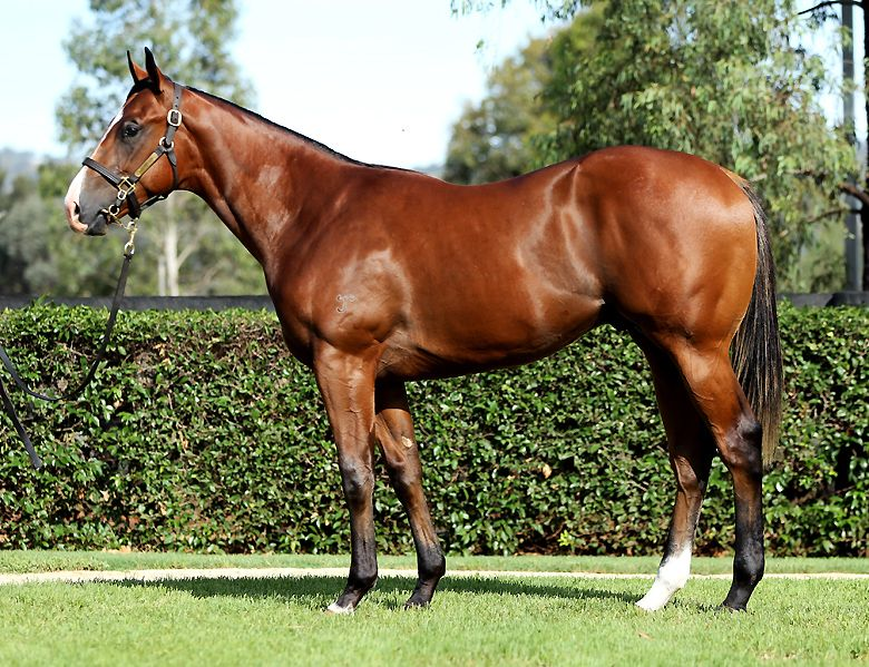 The Real Zeel at 2016 Australian Easter Yearling Sale