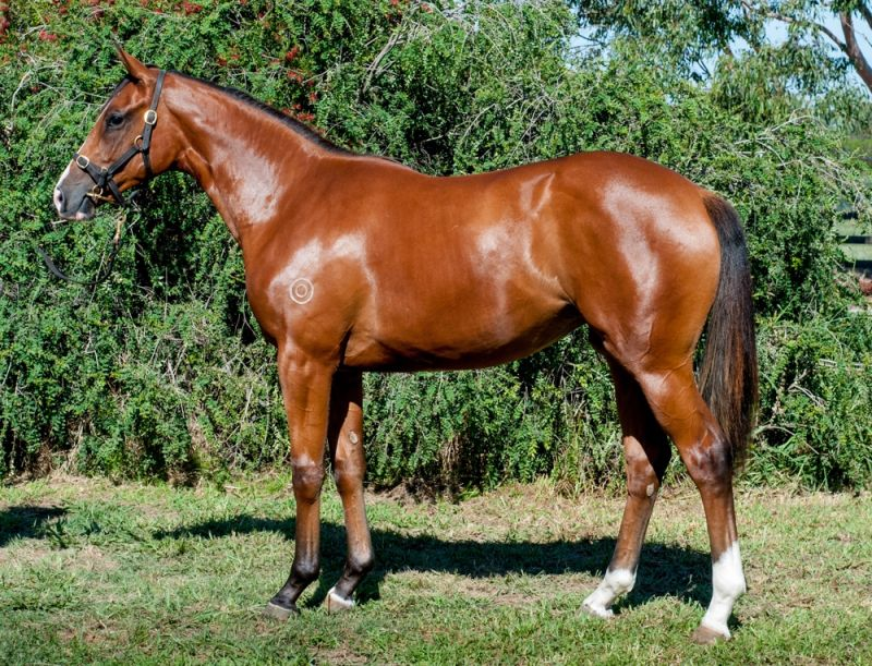Bemboka Queen at 2016 Melbourne Premier Yearling Sale