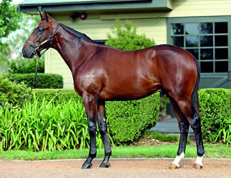 Island Missile at 2016 Melbourne Premier Yearling Sale