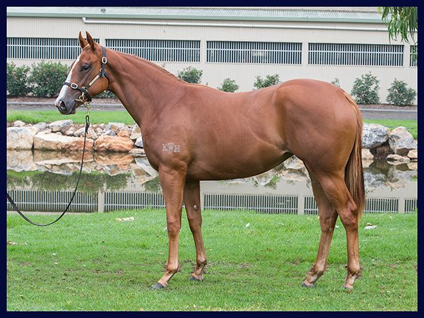 Tatiara at 2017 Australian Easter Yearling Sale