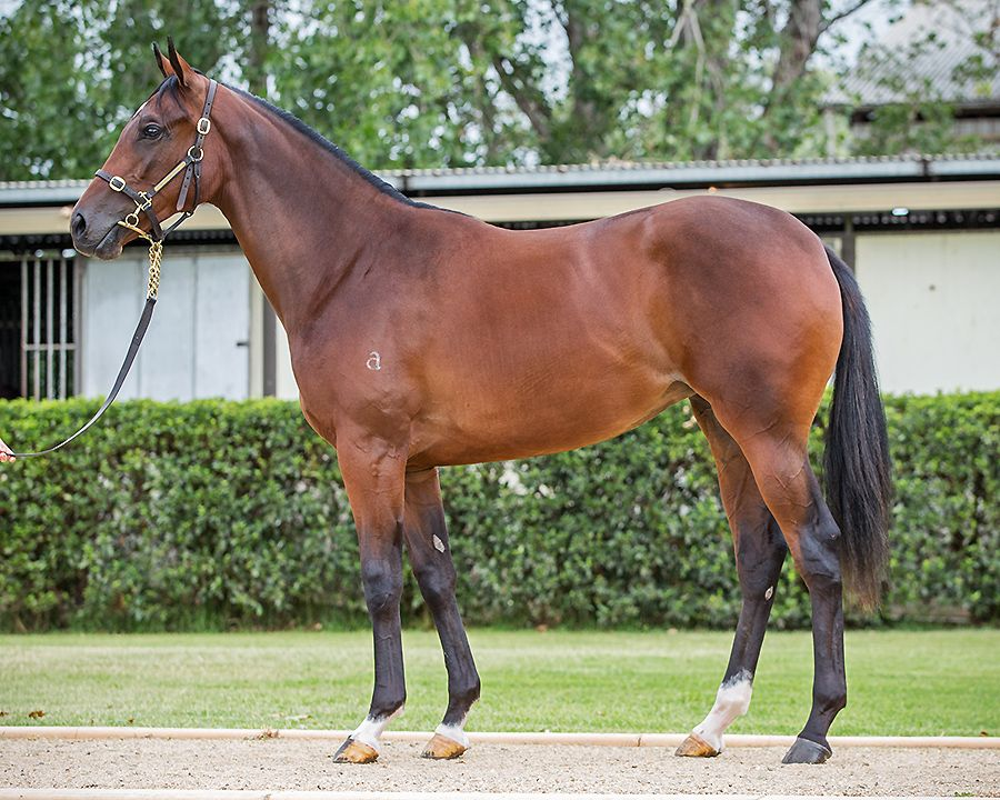 Dunlani at 2017 Classic Yearling Sale