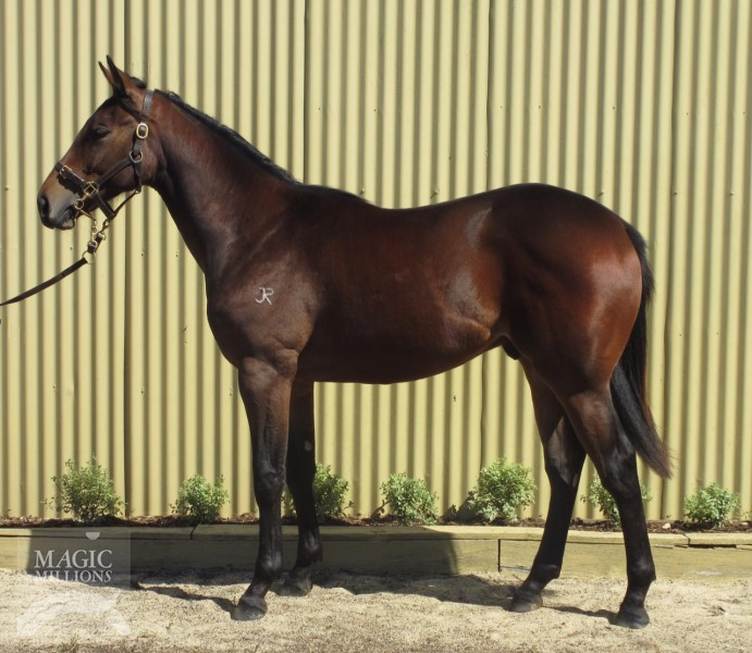 Enki at 2015 Adelaide Yearling Sale