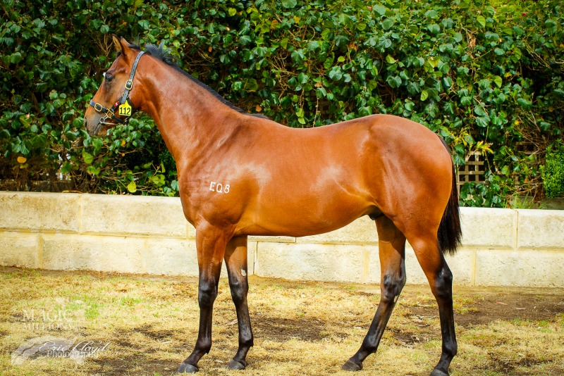 Triple Event at 2015 Perth Yearling Sale