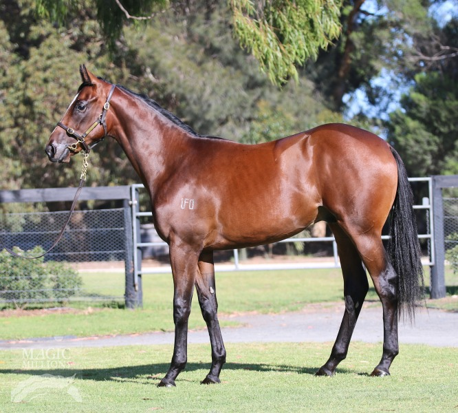 Danger Deal at 2016 Adelaide Yearling Sale