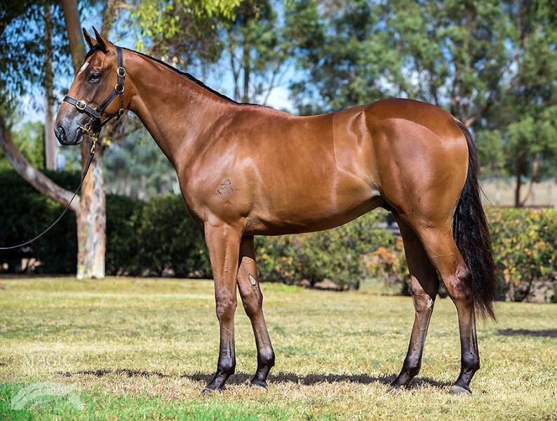 Blinder at 2017 Adelaide Yearling Sale