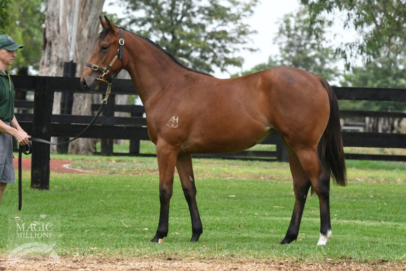 Lagarde at 2017 Gold Coast Yearling Sale