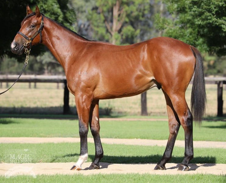 Northern Voyage at 2017 Gold Coast Yearling Sale