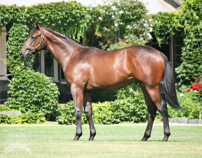 Can't Be Done at 2018 Gold Coast Yearling Sale
