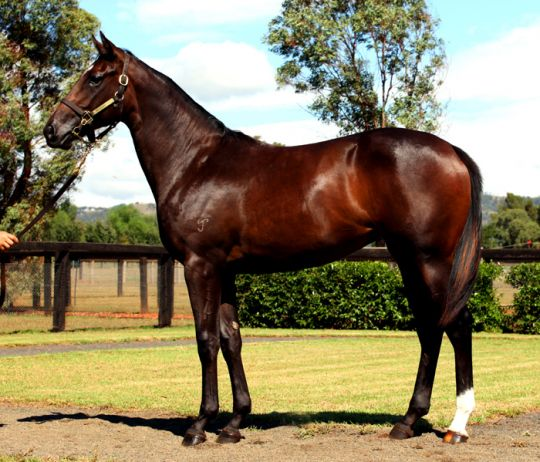 Coogee Coozifa at 2010 Australian Easter Yearling Sale