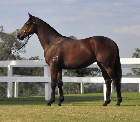 Mariah's Pulse at 2010 Australian Easter Yearling Sale