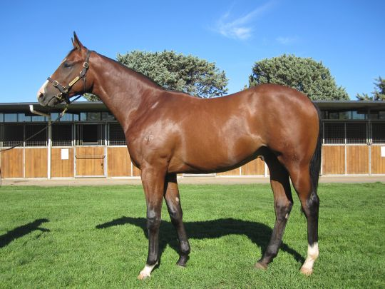 Free Billy at 2012 Sydney Classic Yearling Sale