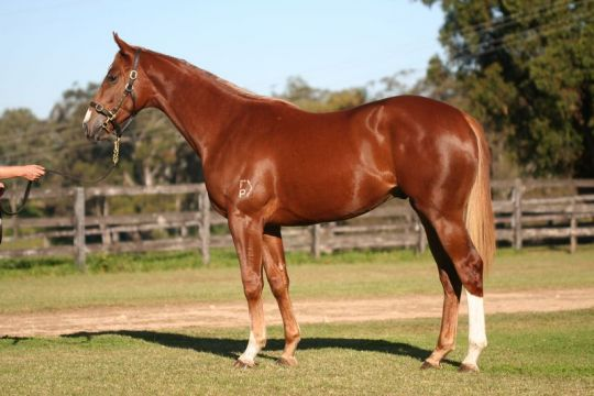 Golden Rule Thoroughbred Horse Profile - Next Race, Form