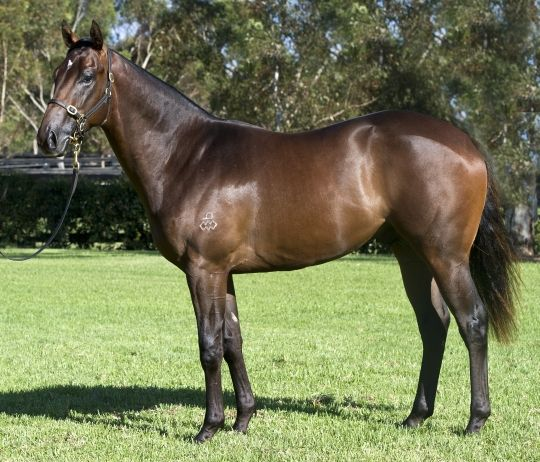 Our Hussler at 2012 Australian Easter Yearling Sale