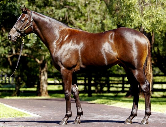 Ice Station at 2013 Australian Easter Yearling Sale