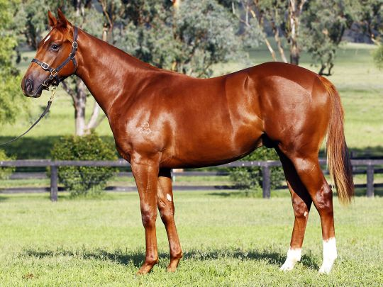 Statton at 2013 Melbourne Premier Yearling Sale