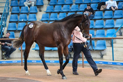 Realise Potential at 2014 Australian Easter Yearling Sale