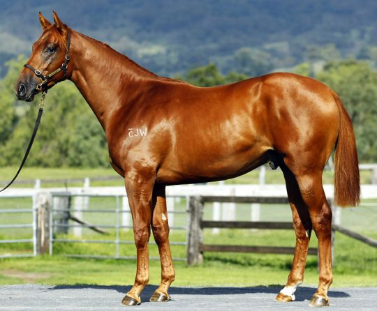 Enjoyable at 2014 Australian Easter Yearling Sale
