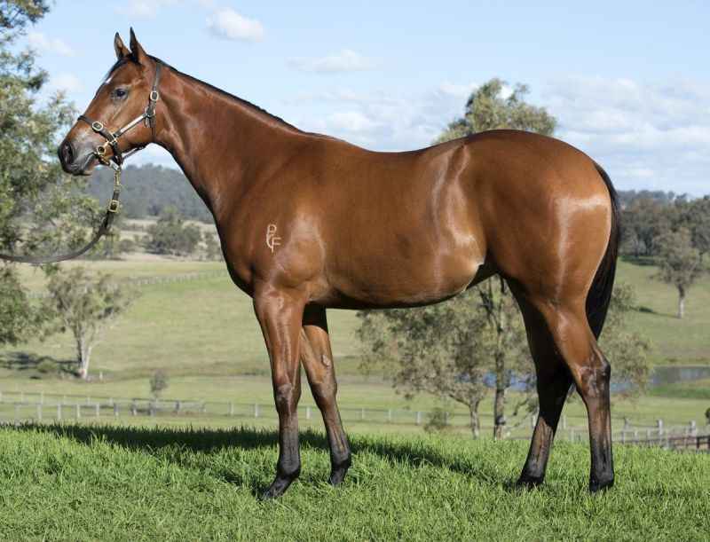 Trilli Filly at 2015 Scone Select Yearling Sale