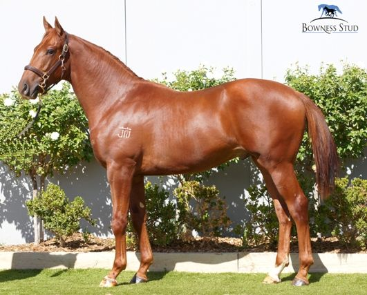Imitation Game at 2015 Melbourne Vobis Gold Yearling Sale