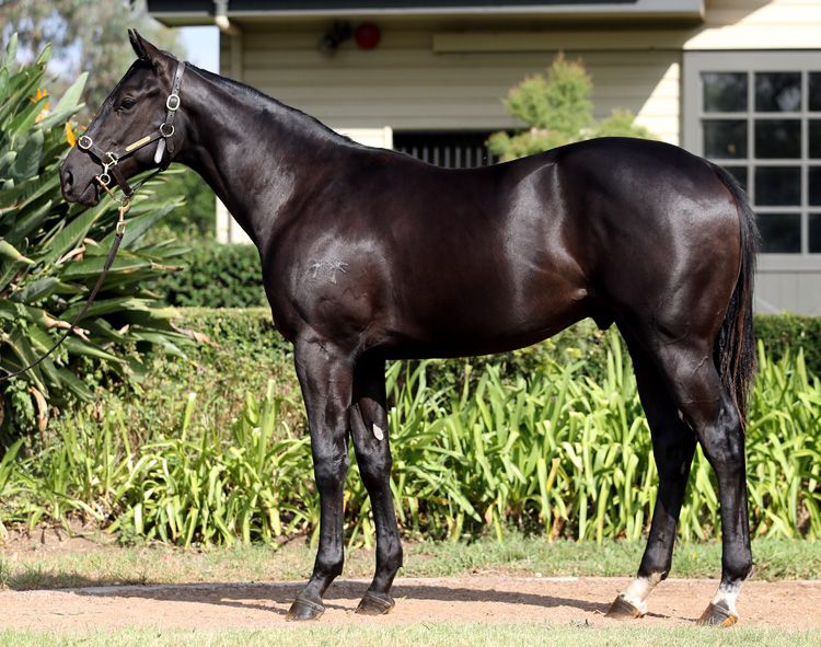Polar Star at 2015 Australian Easter Yearling Sale
