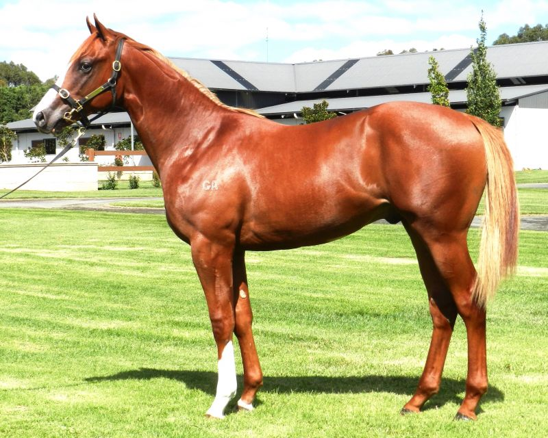 Exponents at 2015 Australian Easter Yearling Sale