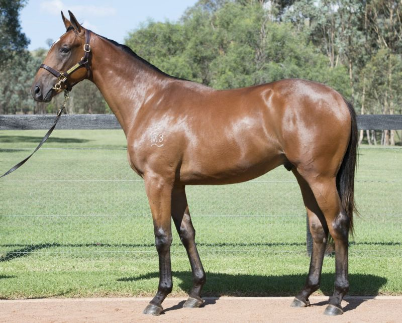Equipped at 2015 Australian Easter Yearling Sale