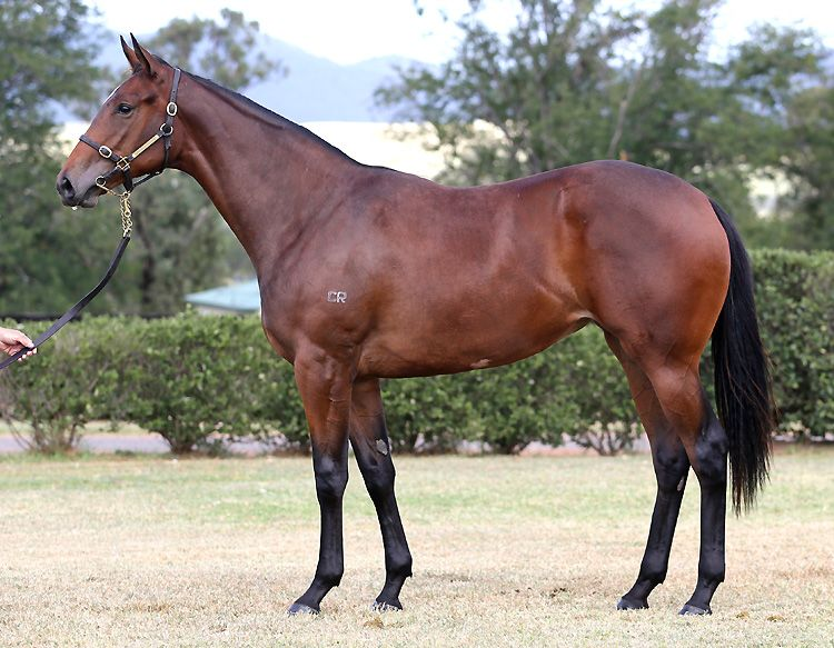 Vendima at 2015 Australian Easter Yearling Sale