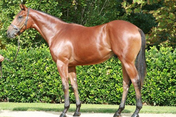 The Harrovian at 2015 Australian Easter Yearling Sale