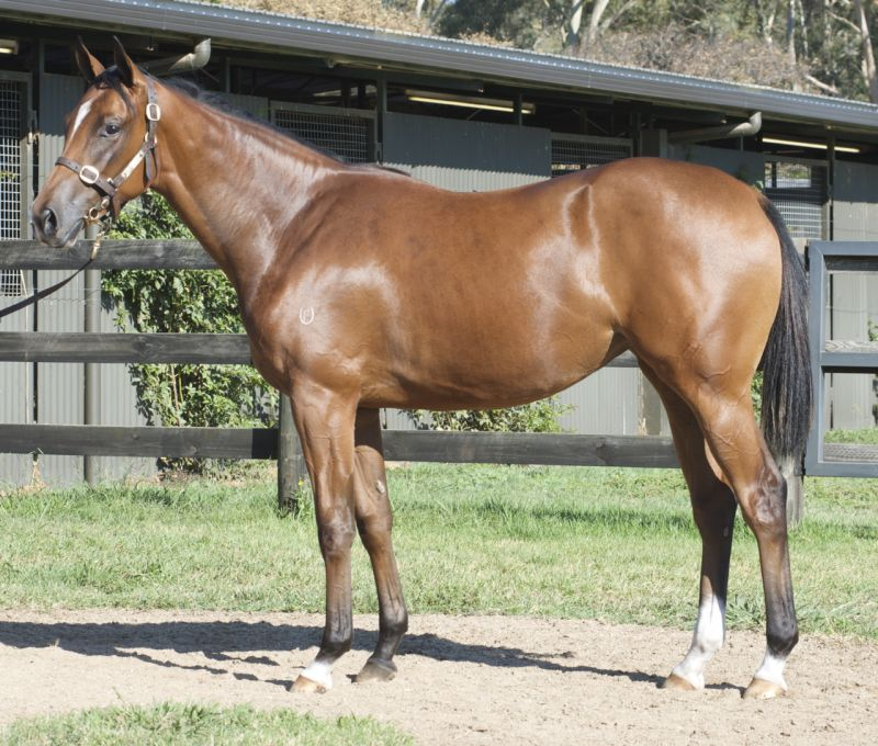 Tata Da Goose at 2015 Melbourne Premier Yearling Sale