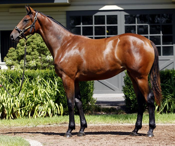 Easy Mover at 2015 Classic Yearling Summer Book