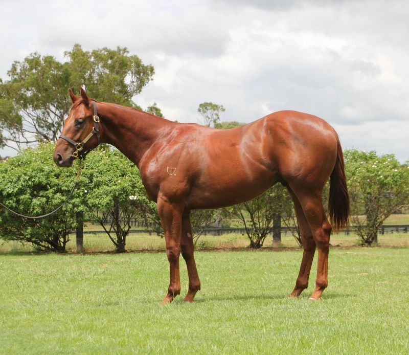 Grimoire at 2015 Classic Yearling Summer Book