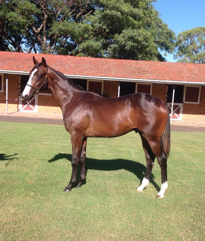 Butter Toast at 2015 Classic Yearling Summer Book