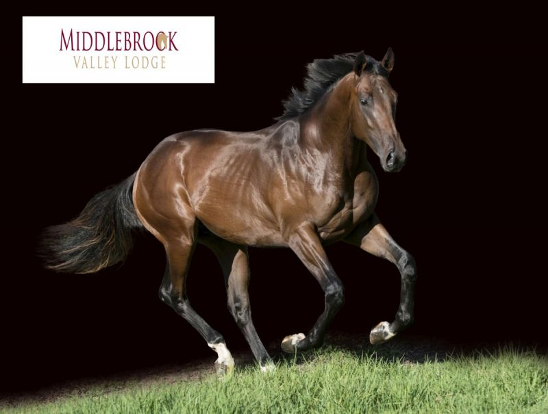 Valfierno at 2015 Classic Yearling Summer Book
