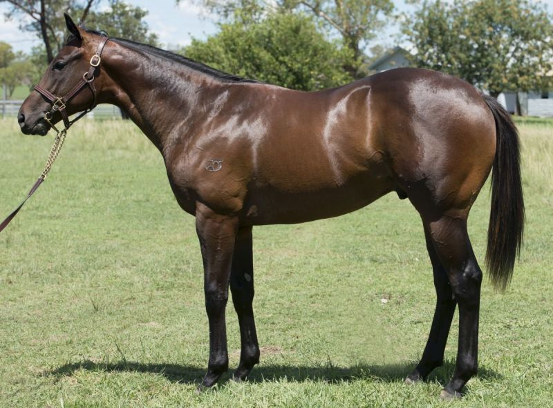 Good Time Charlie at 2015 Classic Yearling Summer Book