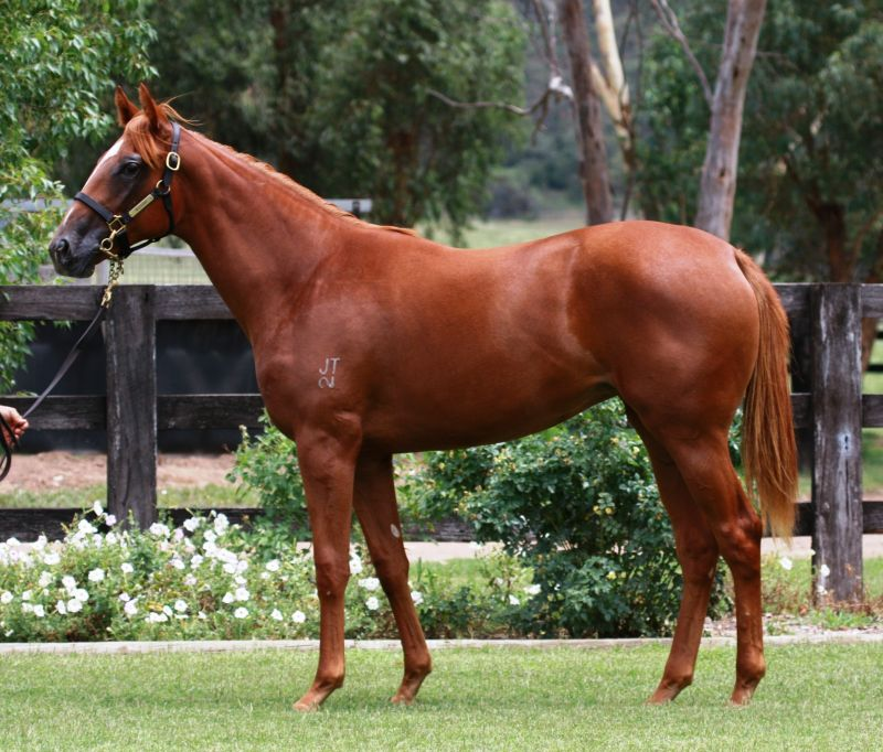 Sunday Hustler at 2015 Classic Yearling Summer Book