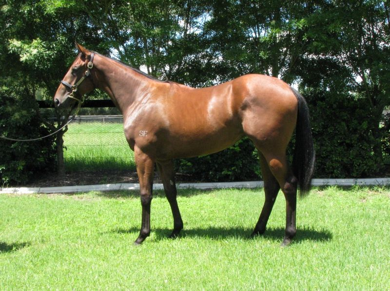 Pearl De Vere at 2015 Classic Yearling Summer Book