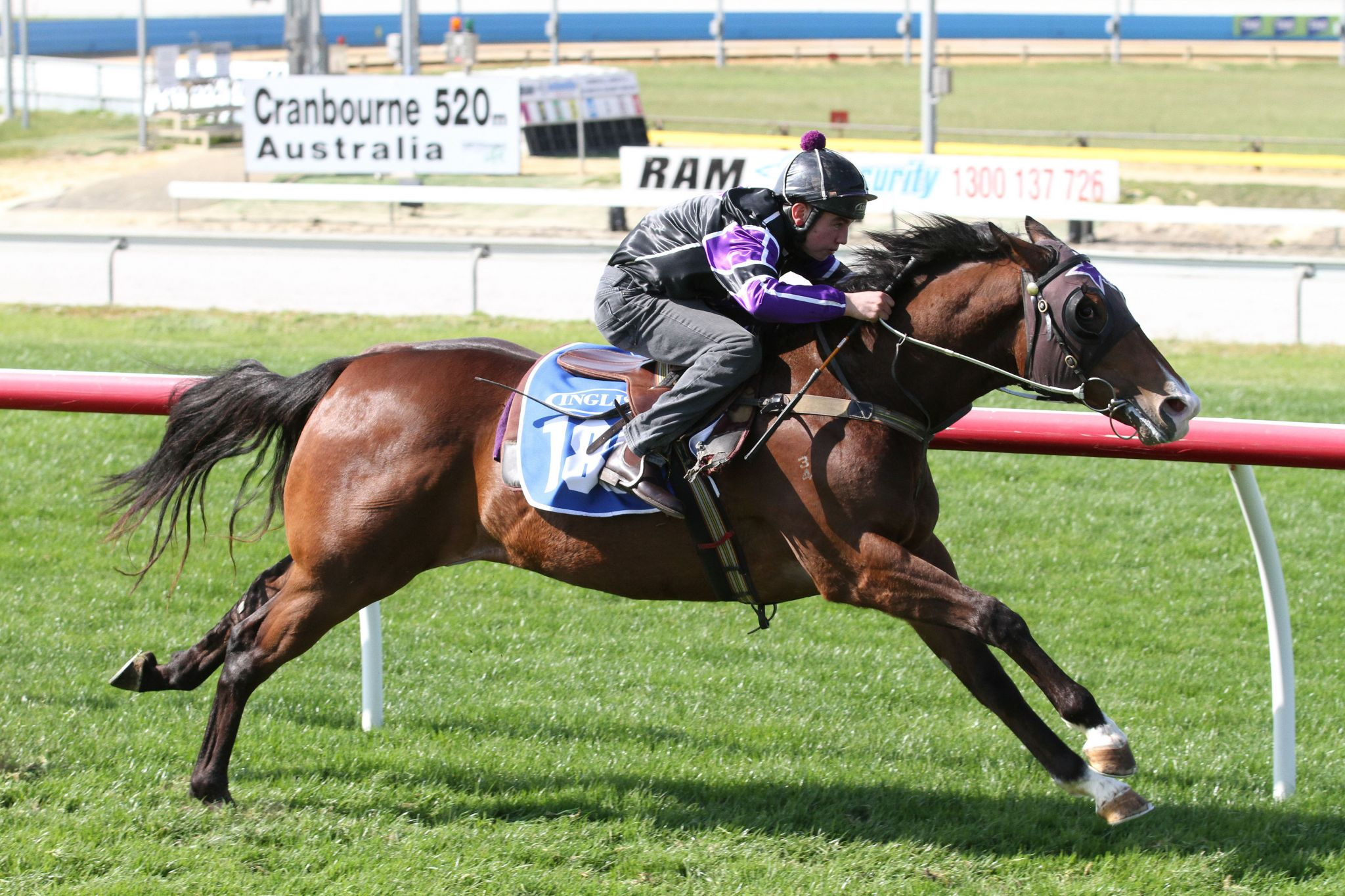 Commanding Witness at 2016 Ready 2 Race Sale