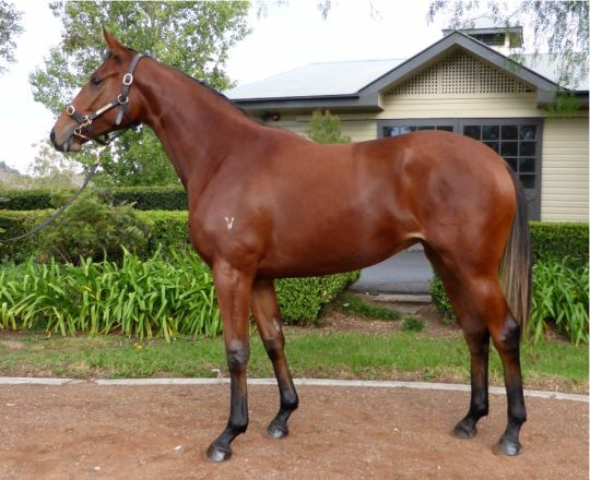 Queen Isla at 2016 Scone Select Yearling Sale