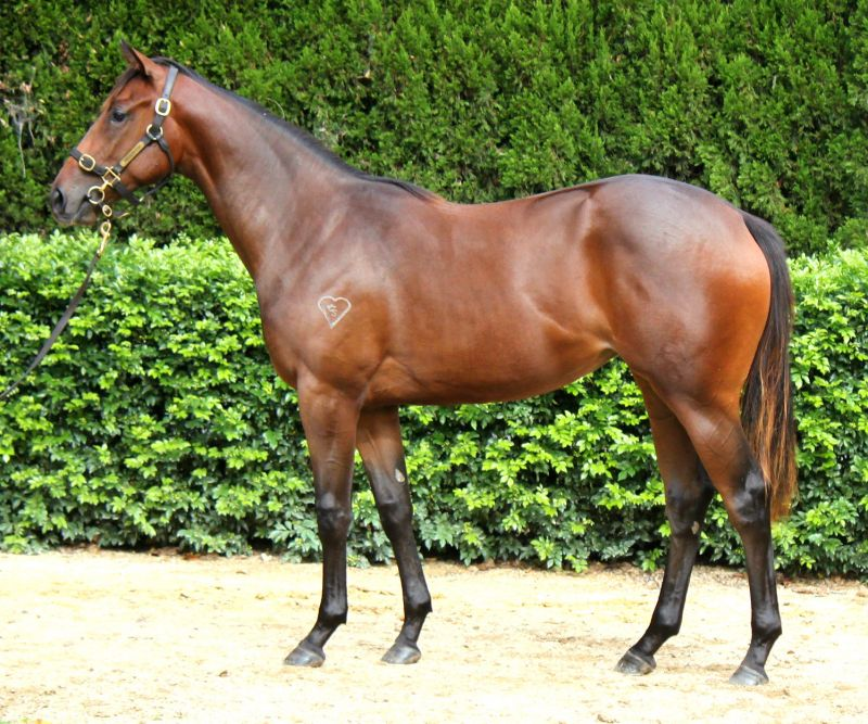 Balle D'or at 2016 Australian Easter Yearling Sale
