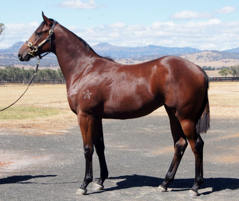 Luqyaa at 2016 Australian Easter Yearling Sale