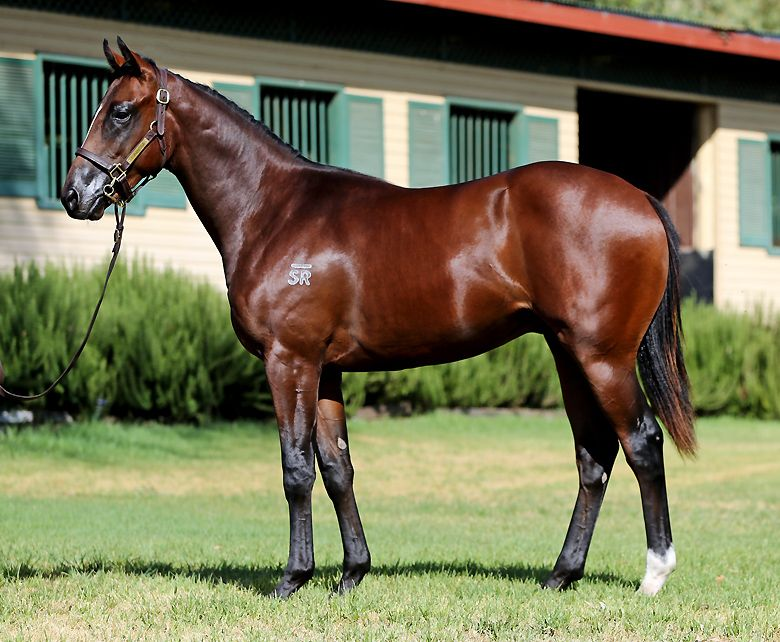 Naboo Star at 2016 Australian Easter Yearling Sale