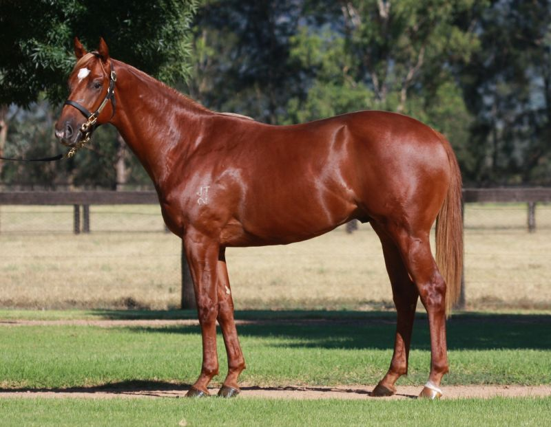 Catmosphere at 2016 Australian Easter Yearling Sale