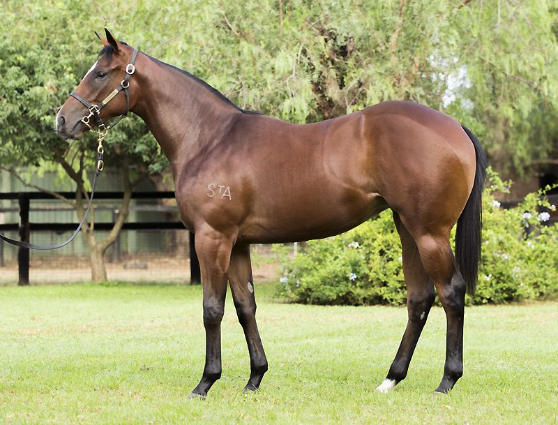 Scarlet Missile at 2016 Australian Easter Yearling Sale