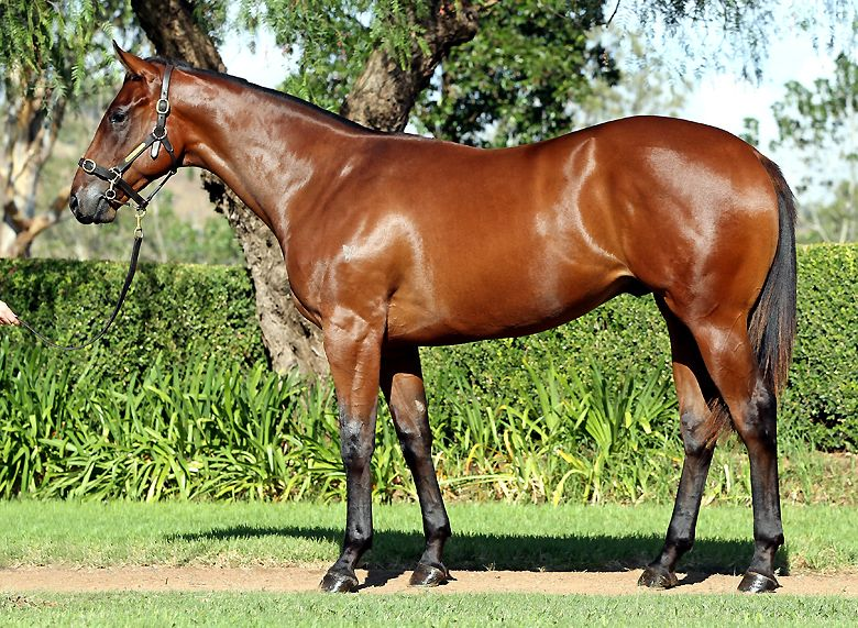 On A Comet at 2016 Australian Easter Yearling Sale