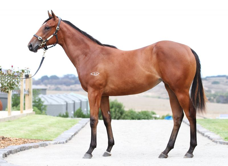No Alibi at 2016 Melbourne Premier Yearling Sale