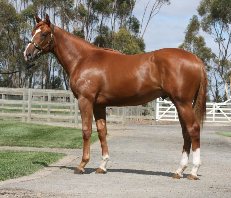 Yankee Toff at 2016 Melbourne Premier Yearling Sale