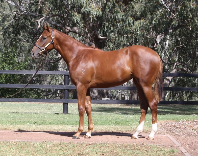 Written On Rock at 2016 Melbourne Premier Yearling Sale