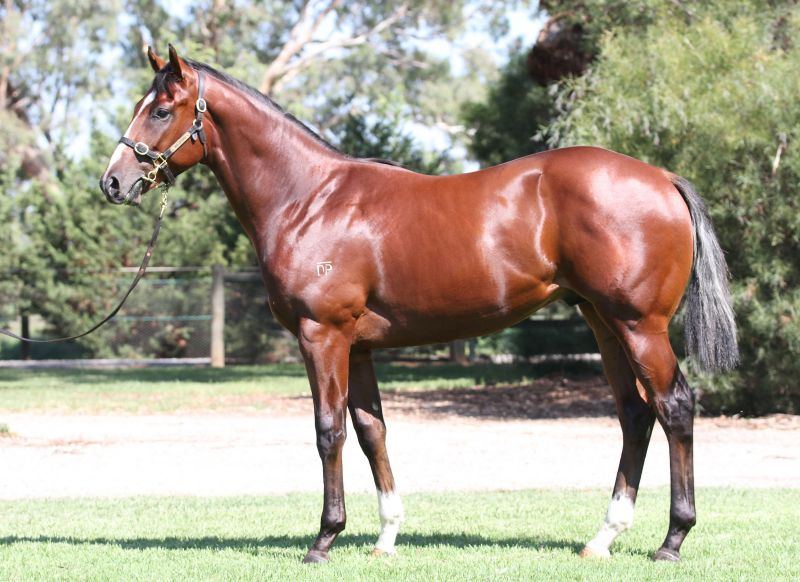 Thee Jenner at 2016 Melbourne Premier Yearling Sale
