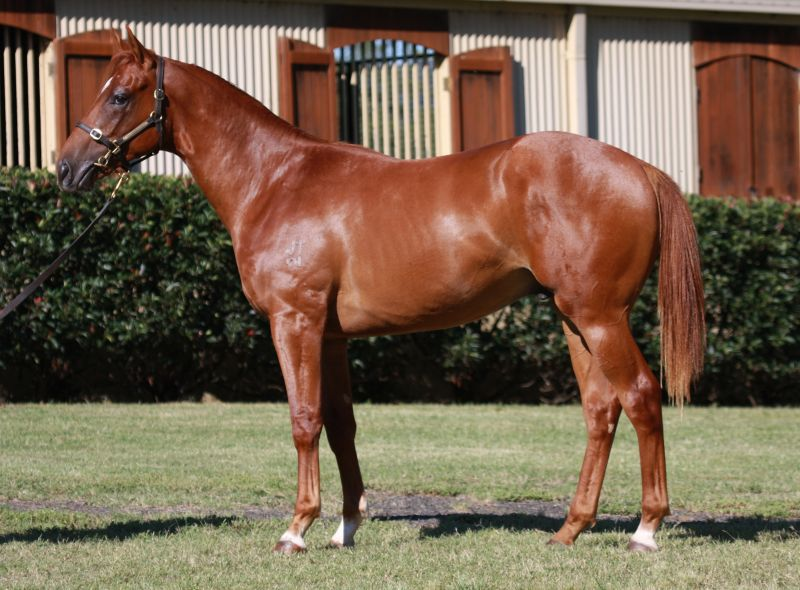 Rock Tsar at 2016 Classic Yearling Sale